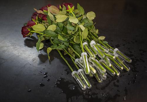 Roseshire-1